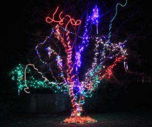crazy-tree-5758